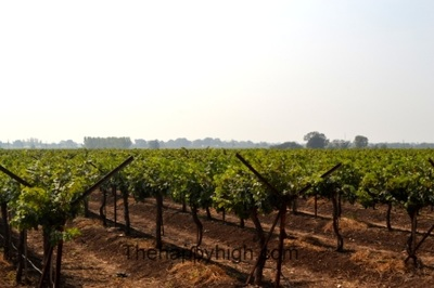 reveilo wines Nashik vineyards